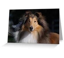Majestic Collie Greeting Card