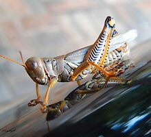 The Colors of A Grasshopper by GeometryOfColor