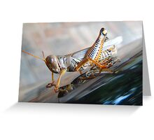 The Colors of A Grasshopper Greeting Card
