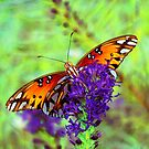 Beautiful Butterfly by Catherine  Howell