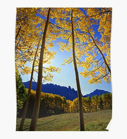 Yellow Forest Clearing Poster