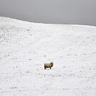 Its Fleece Was White As Snow by jobbys