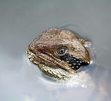 Eastern Water Dragon by Sarah Jennings