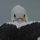 Pelican look by Jose M.F. Rebelo