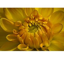 All Yellow Photographic Print
