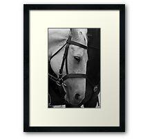 Police Horse Framed Print