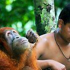 Orangutan rescue centre in Sumatra by leannepapas
