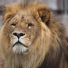 King on watch by Steve Bullock