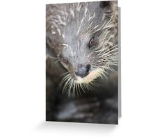 otter stare Greeting Card
