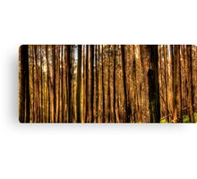 Bushfire Abstract -The HDR Experience Canvas Print