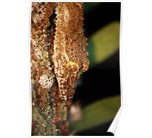 leaftail gecko closeup Poster