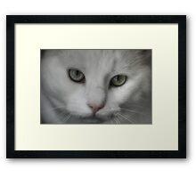 Furry Little Monster Framed Print