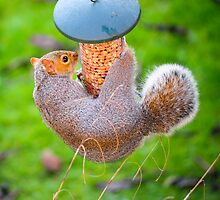 Squirrel Proof Bird Feeder: LOL by DonDavisUK