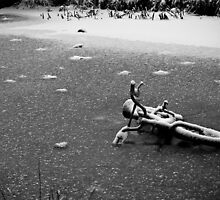 Forgotten bicycle by sboulanger