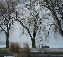 WEEPING WILLOWS IN WINTER by JoAnnHayden