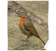 A Little Robin Friend : Gt.Britain & Europe Poster