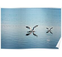 Two birds hitting the water Poster