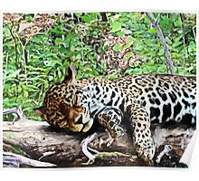 Sleeping Jaguar Poster