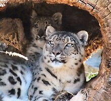 Snow Leopard And Cub by Lynn A Marie