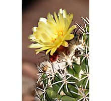 Yellow Cactus Flower Photographic Print
