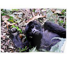 Gorilla Contact - Bwindi Impenatrable National Park, Uganda Poster