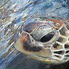 Green turtle by loz788