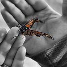 Broken Wings by Carrie Bonham