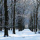 Autumn or winter II by jchanders