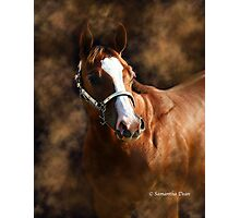 First Place Filly Photographic Print