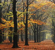 Autumn or winter I by jchanders