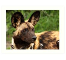 African Painted Wolf  Art Print