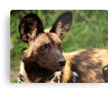 African Painted Wolf  Metal Print