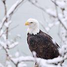 Proud Eagle by Gina Ruttle  (Whalegeek)