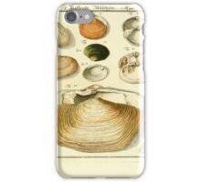 Neues systematisches Conchylien-Cabinet - 300 iPhone Case/Skin
