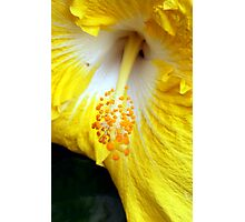 Pollinate me Photographic Print