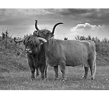 Highland Cows (2 of 2) Photographic Print