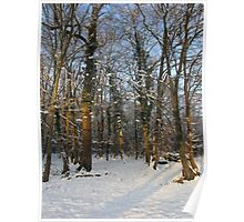 Snowy woodland Poster