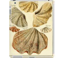 Neues systematisches Conchylien-Cabinet - 345 iPad Case/Skin