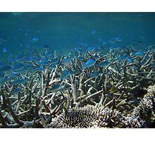 A School Down Under - Ningaloo Reef, Australia Photographic Print