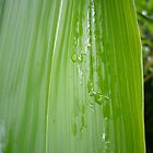 Raindrops on Leaf by miami17