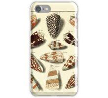Neues systematisches Conchylien-Cabinet - 166 iPhone Case/Skin