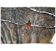 My Christmas Robin Poster