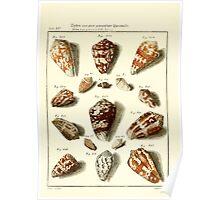 Neues systematisches Conchylien-Cabinet - 159 Poster