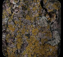 Bark & Lichen by Aaron Campbell