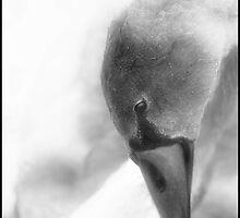 Swan Lake by Mike  Sherman
