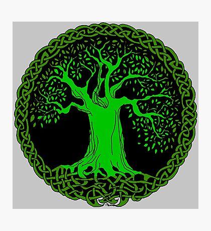 Celtic Tree (Green version) Photographic Print