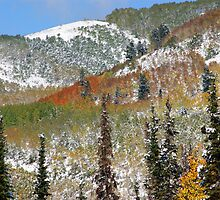 Big Cottonwood Cyn.  by bonnieb