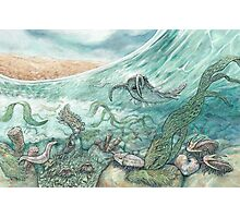 The Cambrian Photographic Print