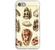 Neues systematisches Conchylien-Cabinet - 168 iPhone Case/Skin