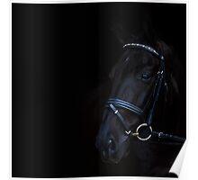 Horse Head shot   Poster